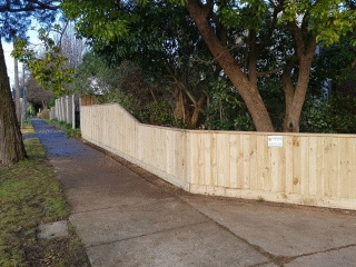 Treated Pine Paling Fence with Capping in Blackburn
